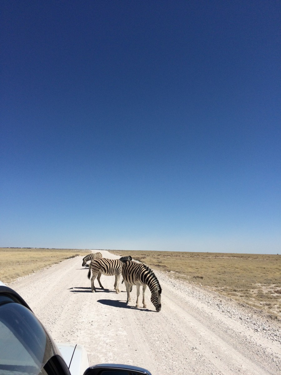 Tourist Road in Etosha National Park